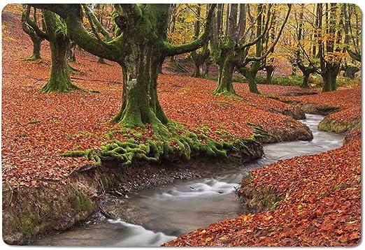 Paisaje Bienvenido Mat Fluido Stream Colorido Otoño Bosque Hojas Gorbea Natural Park España Floor Mat Paprika y Verde 20
