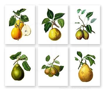 Amazoncom Pears Fruit Botanical Wall Decor Pears Artwork set of
