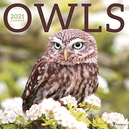 TF PUBLISHING 2021 Owls Monthly Wall