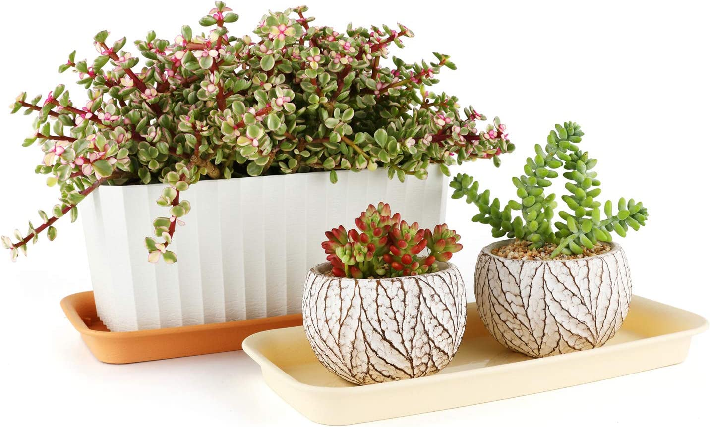 Orange Plateau de Pot de Plantes 36 cm Rectangle Loft Urban Soucoupe Lot de 4 Dessous de Pot de Fleurs en Plastique T4U Soucoupe pour Pot de Fleur