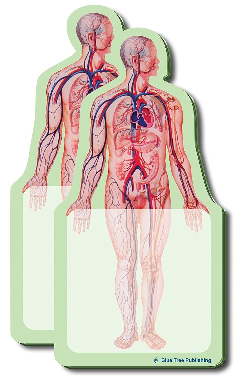 Amazon.com: Anatomy Sticky Notes (Anatomy Body): Industrial & Scientific