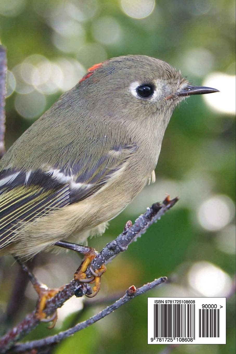 Ruby Crowned Kinglet Regulus Calendula Bird Journal 150 Page Lined Notebook Diary Image Cool 9781725108608 Amazon Com Books