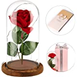 anaoo Die Sch/öne und Das Biest Verzaubert Rose Set Glaskuppel mit Weiches Pine Base Rose in Glas Romantisch Geschenke Wohnkultur f/ür Muttertag Geburtstag Valentinstag Jahrestag