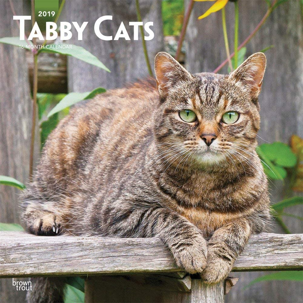 Calendario 2019 gato rayado – gato tigre gris – + incluye un – Agenda de bolsillo 2019: Amazon.es: Oficina y papelería