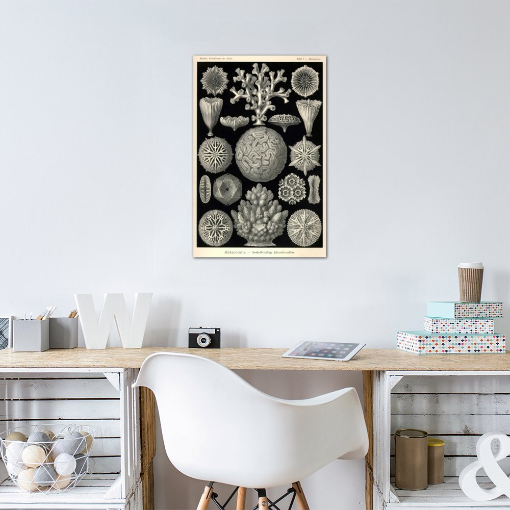 60 x 40//1.5 Deep iCanvasART 3 Piece Hexacoralla Canvas Print by Print Collection