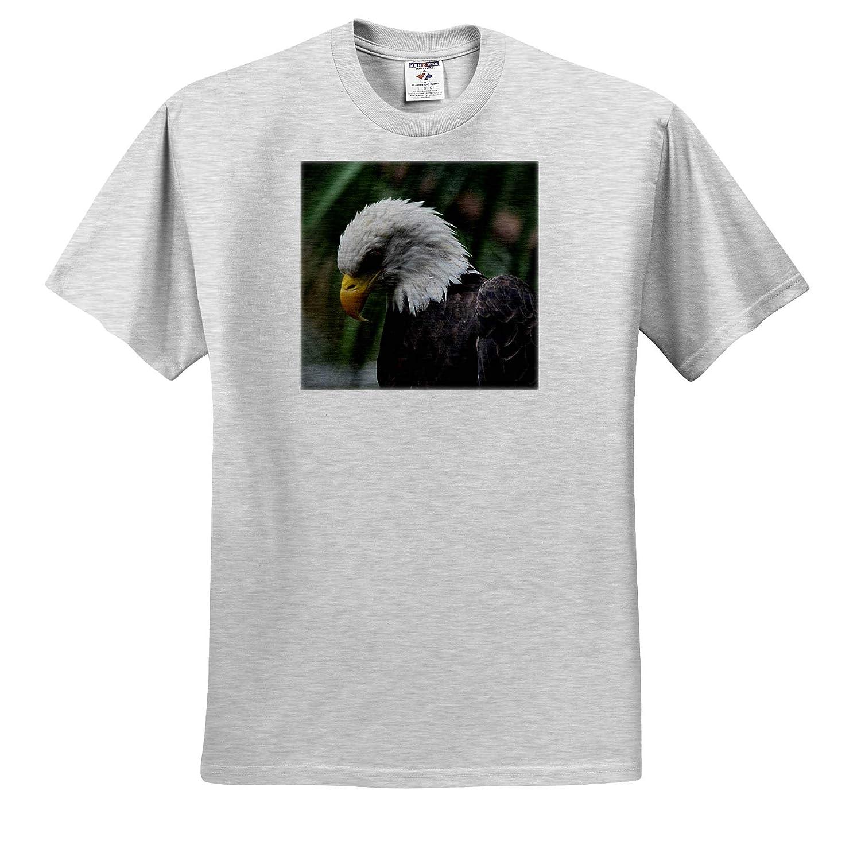 3dRose Susans Zoo Crew Animal T-Shirts Bald Eagle Looking Down