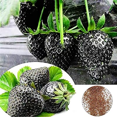 JingYu 200Pcs Rare Black Strawberry Seeds, Delicious Fruit Suitable for Planting Garden and Yard Strawberry Seeds : Garden & Outdoor