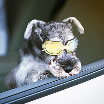 Namsan - Gafas de sol para perro, protección UV, impermeables, resistentes al viento