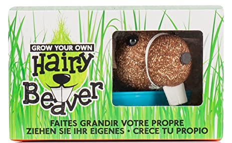 Npw Np21455 Grow Your Own Hairy Beaver Planter Brown