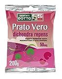 Sdd 40030050 Prato Dichondra Repens, Verde