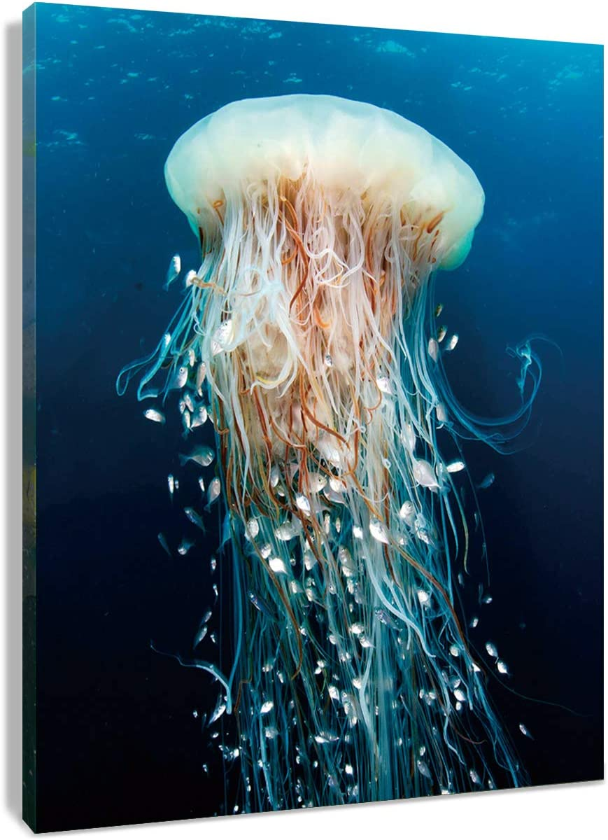 HVEST Jellyfish Canvas Wall Art Watercolor Marine Life Wall Artwork Underwater Animal Painting for Living Room Bedroom Bathroom Decor,Stretched and Framed Ready to Hang,12x16 inches