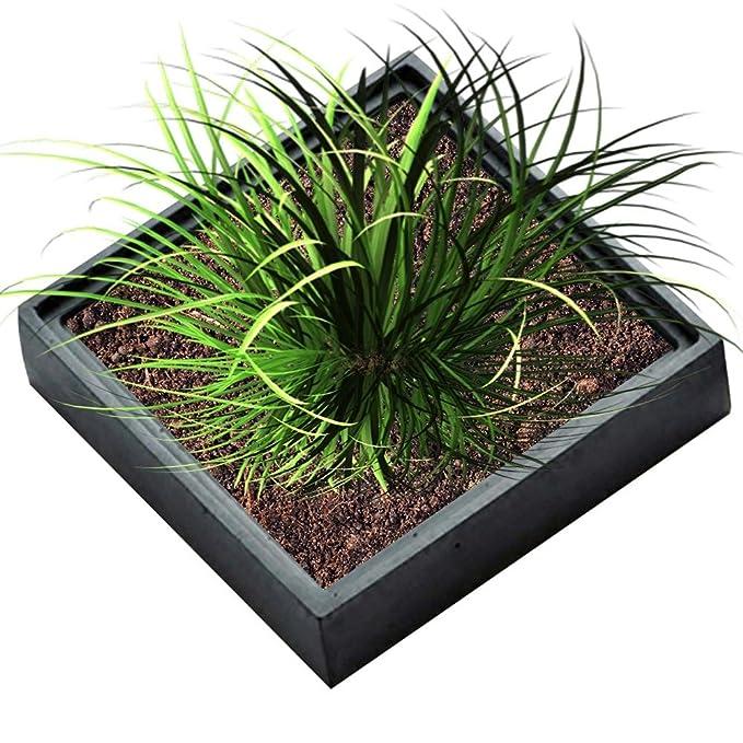 Molde de silicona para maceta de plantas suculentas, diseño de cactus de yeso de cemento fleshy para decoración del jardín o el hogar: Amazon.es: Bricolaje ...