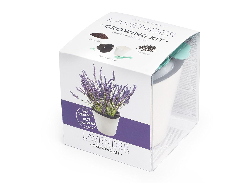 Growing kit Lavender (Black) VISO TRADE