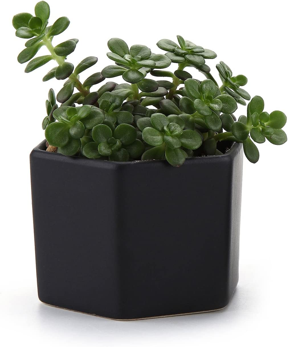 T4U 2.75 Inch Ceramic Six Sizes Semi Luster Surface Succulent Plant Pot Cactus Plant Pot Flower Pot Container Planter Matte Black