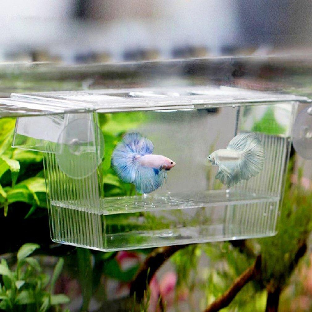 VWH Petite Boîte D'incubation 12 x 7 x 7cm Aquarium Acrylique Aquarium