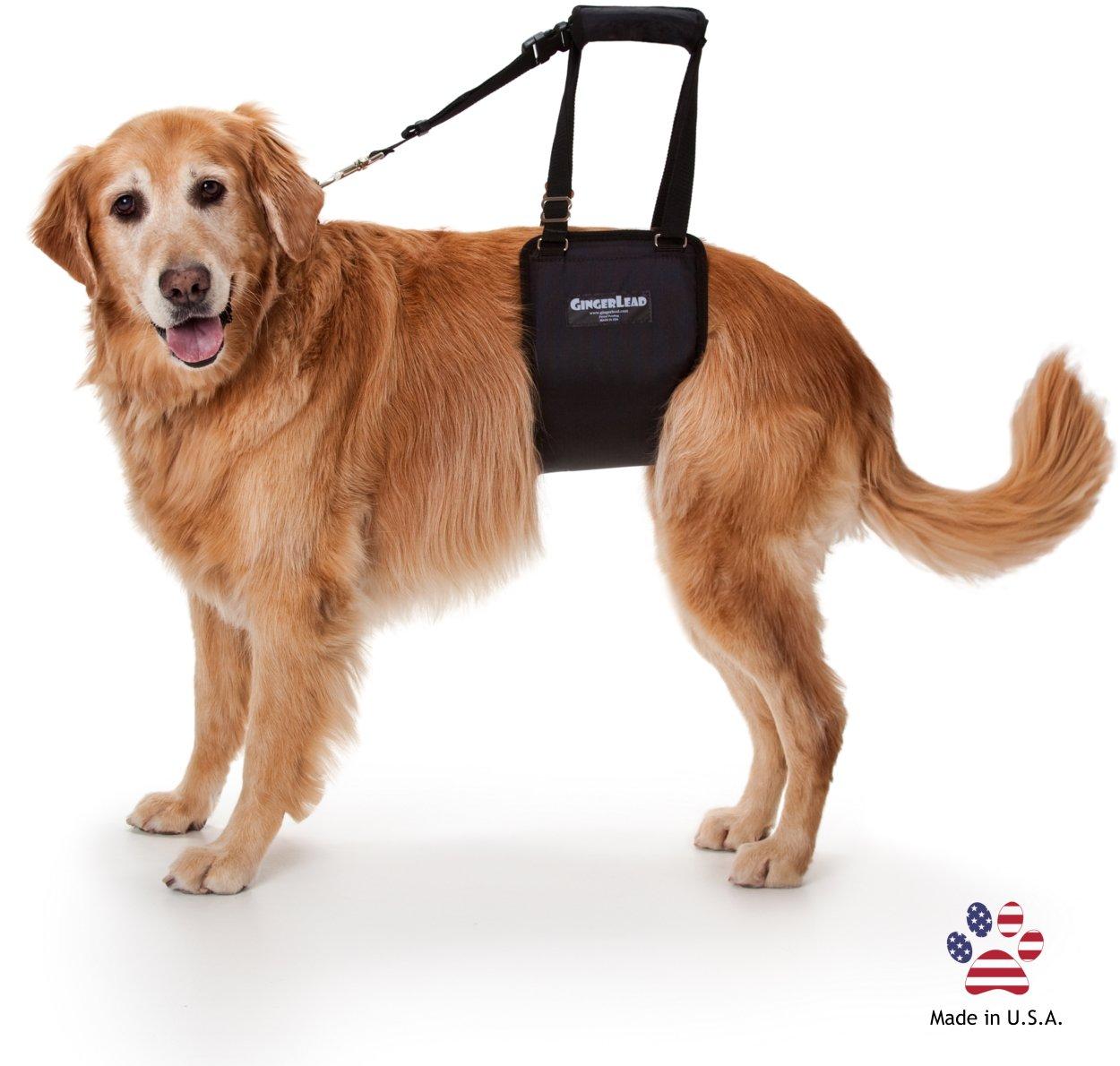 Arnes acolchado ayuda perros con correa-Grande hembras