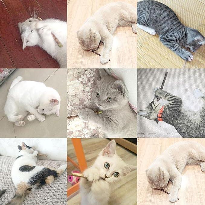 Aolvo - Varillas de masticar para gatos, 10 unidades, Matatabi natural, para masticar dientes, juguete para masticar, palo para gatos y mascotas, ...