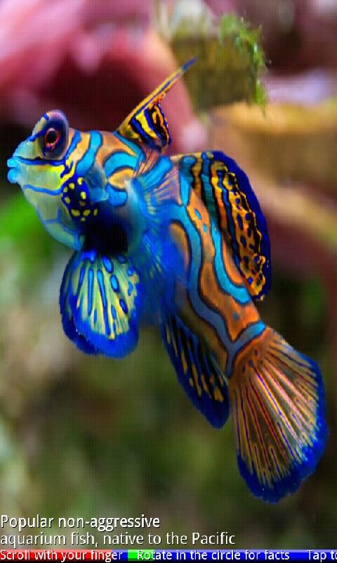 Marine aquarium fish 2 appstore for android for Amazon aquarium fish