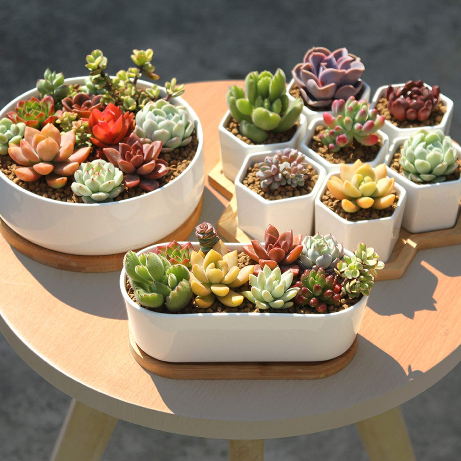 Premium Rosette Succulents, 9 Assorted Rooted Succulents in 4'' Planter Pots with Soil, Real Live Succulents Bonsai for Indoor Home Office Cactus Decor, Terrariums, Mini Garden by The Next Gardener (Image #3)