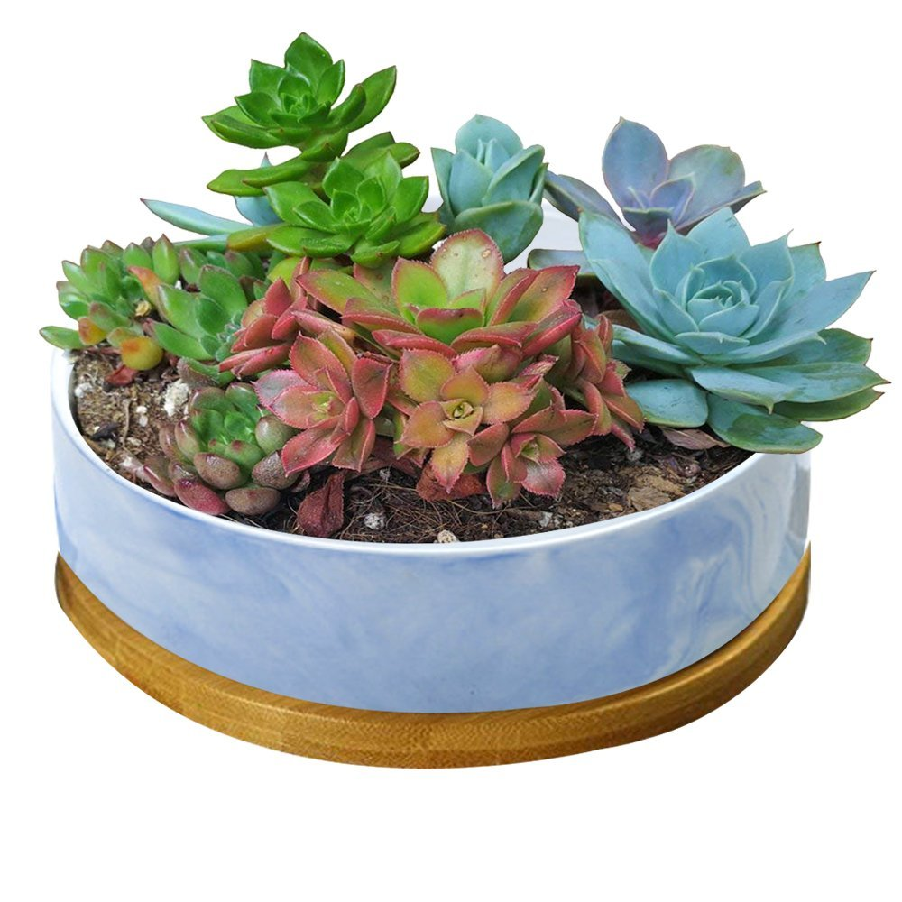 STAR-TOP Succulent Planter Pot,Small Modern Decorative Ceramic cement Flower Plant Pot with Drainage - Home Office Desk Garden Mini Cactus Pot Indoor Decoration (Blue Marble pot) by STAR-TOP