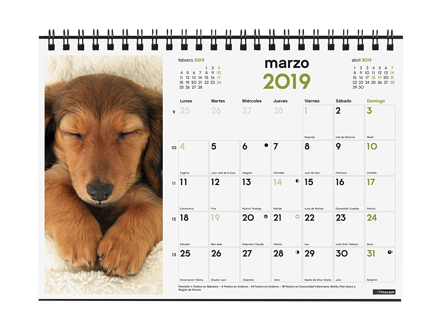 Amazon.com : Finocam 780322819 Desktop Calendar 2019 ...