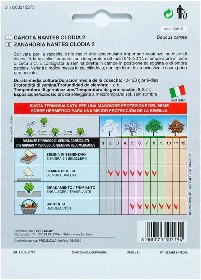 Semillas Zanahoria Nantes Temprana (7 Gramos): Amazon.es: Jardín