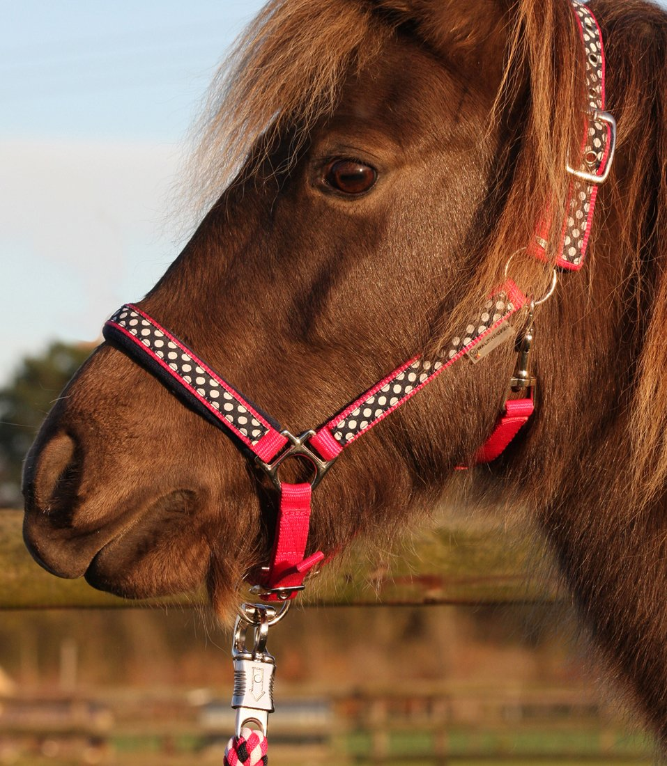 Halter and Rope Set, Size: Mini Shetland Pony