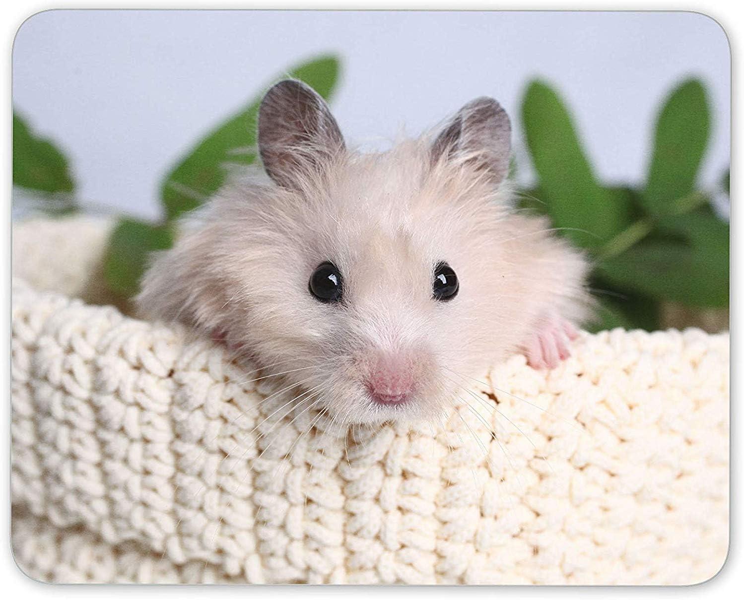 XIUZHIZH Cute Hamster Mouse Mat Pad - Mice Rat Gerbil Pet ...