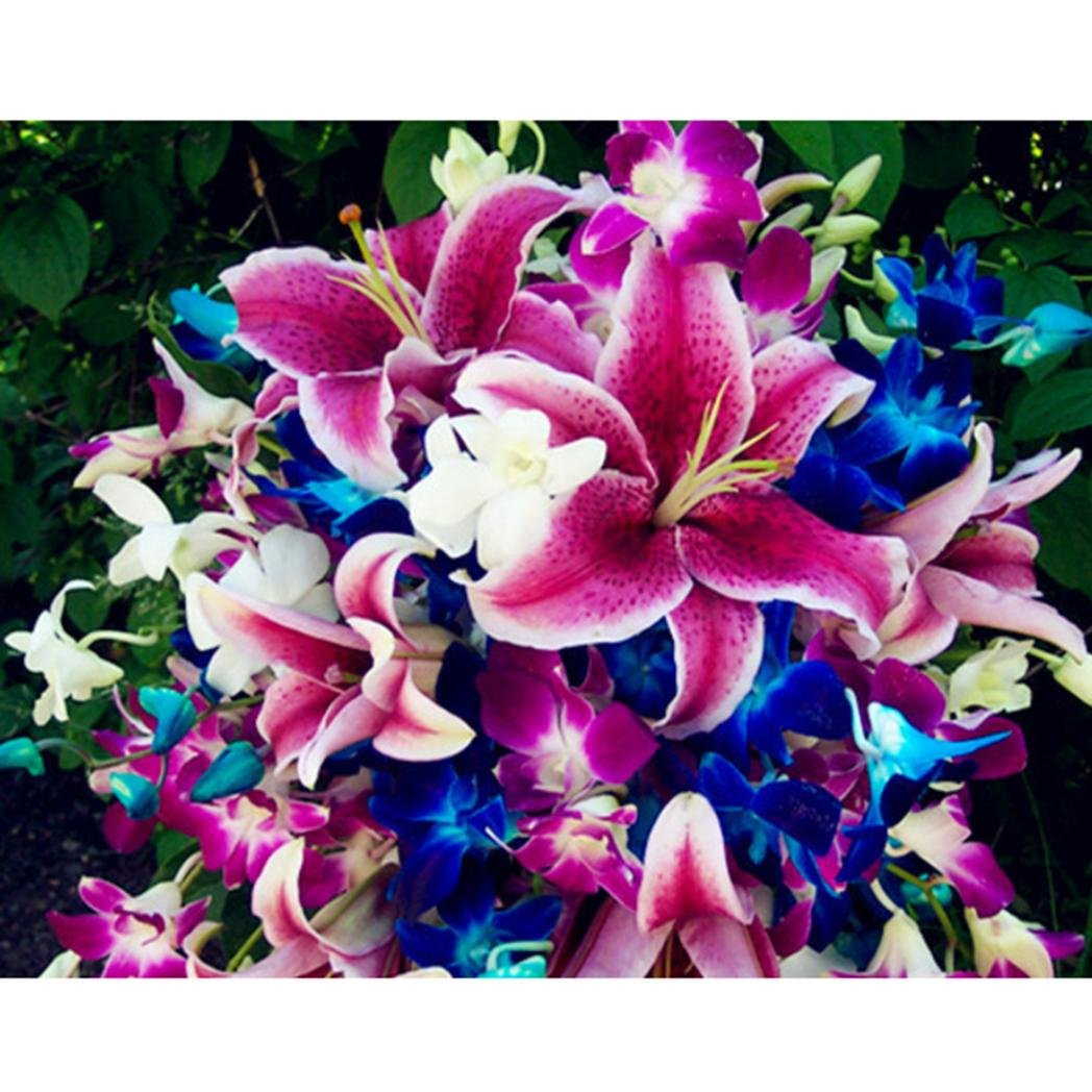 WuWxiuzhzhuo 50Pcs Magnifiques Couleurs Mélangées Graines de Fleur de lys, Home Garden Yard Plante Ornement