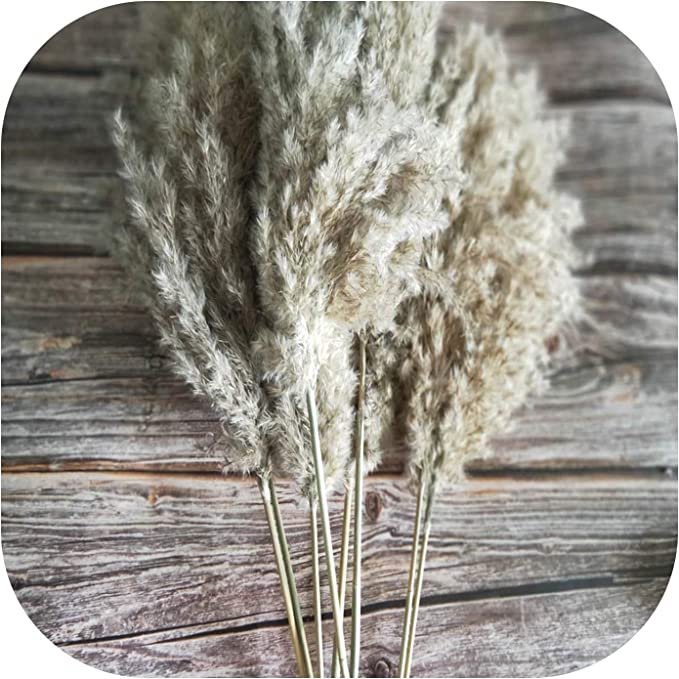 Amazon.com: Easy-S-E-H 20 Pcs Dried Small Pampas Grass Decor Natural Phragmites Real Ptotos,20Pcs Raw Color,M