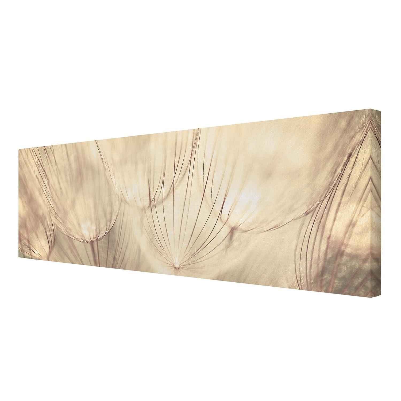 Bilderwelten Leinwandbild - Pusteblumen Nahaufnahme in wohnlicher wohnlicher wohnlicher Sepia Tönung - Panorama Quer, Größe HxB  50cm x 150cm a76645