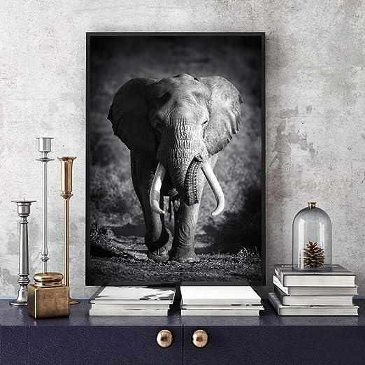 Amazon Com Jhljianju 1pvahsi Hayvan Fil Portre Poster Ve Baski