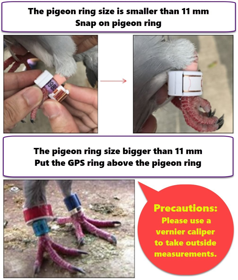 Skyleader 2 Gps Pigeon Tracker Ring 2 Port Package Amazoncouk