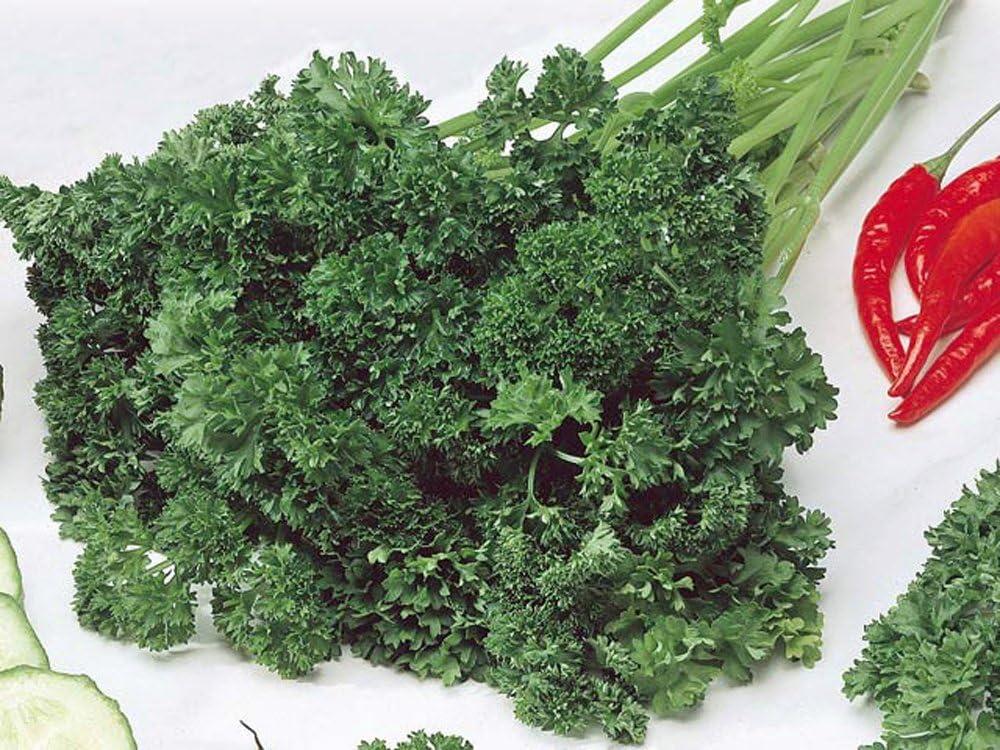 Moss Curled Bulk Herb Seed 1//4 oz Parsley Seed Heirloom Herbs Non-GMO 4500ct