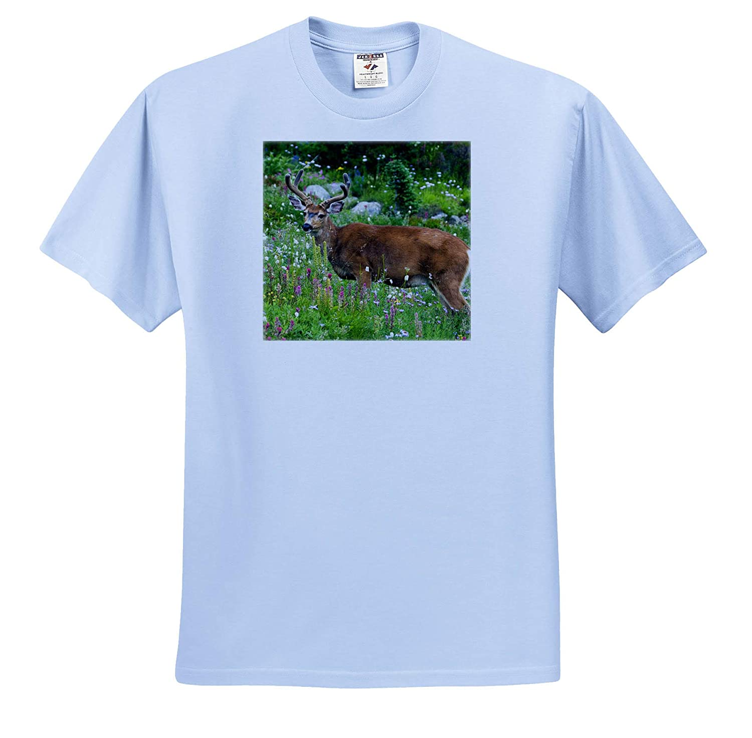 ts/_315166 Black-Tailed Deer Buck Adult T-Shirt XL Deer 3dRose Danita Delimont