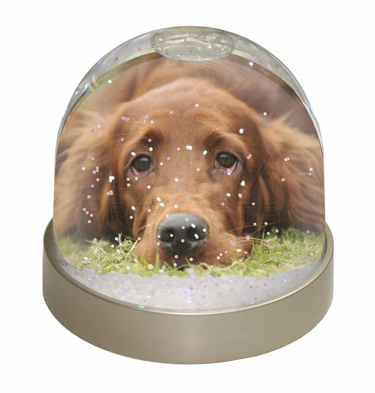 Advanta Irish Red Setter Puppy Dog Snow Dome Globe Waterball Gift, Multi-Colour, 9.2 x 9.2 x 8 cm Advanta Products AD-RS2GL