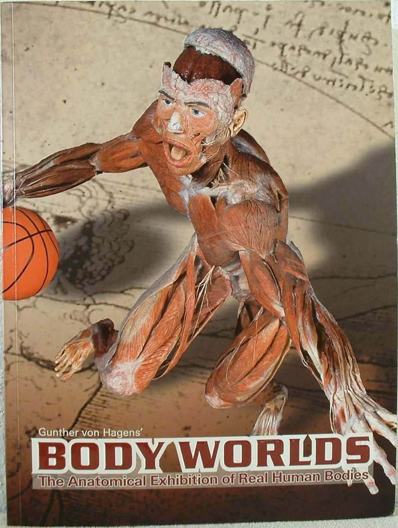 Download Bodyworlds: The Anatomical Exhibition of Real Human Bodies pdf epub