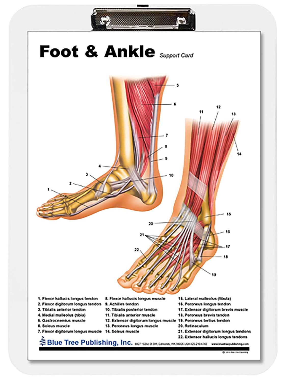 Amazon Foot Ankle Insert Clipboard Industrial Scientific
