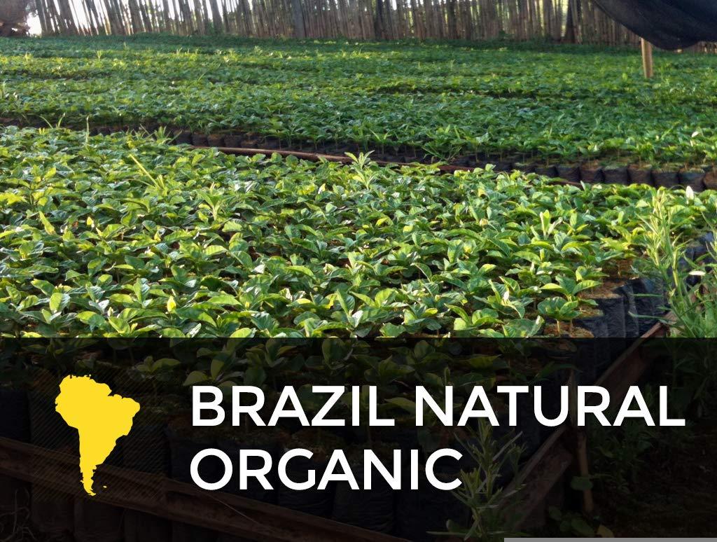 Brazil Fair Trade Natural Organic Cafe Femenino Green Coffee Beans (12.5lb) by Sonofresco