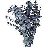 オオチノウエン プリザーブドフラワー グリーン 全長 約65~70cm ユーカリ・ギンマルバ DO002150-700 140g入