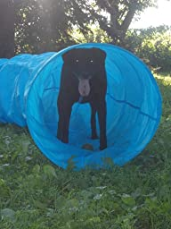 Training Dog Tunnel