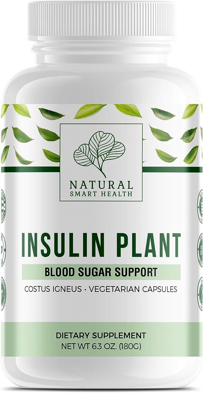 Insulin Plant Vegetarian Capsules (Costus Igneus Capsules) - Blood Sugar Support - Made in USA