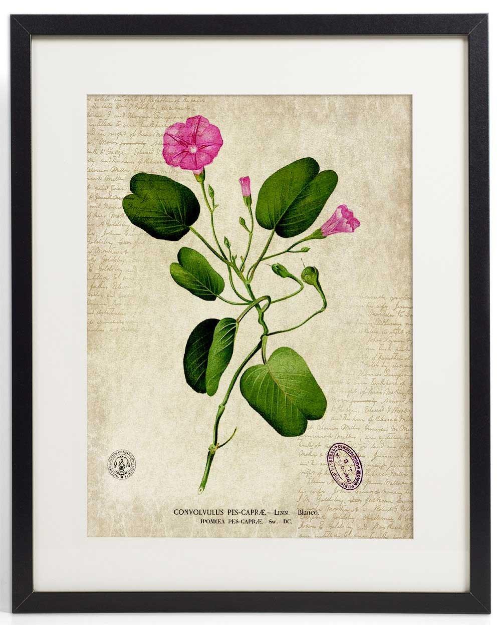 IDIOPIX Vintage Botanical Floral Print Art Home Wall Art Print No.7 Set of 4 Prints UNFRAMED