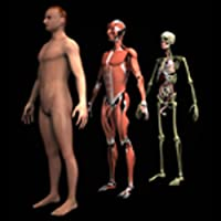 Drill Down Anatomy by WAGmob
