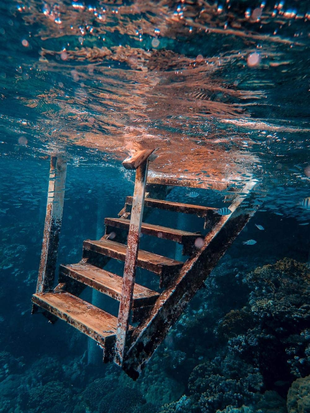HQHff Escaleras oxidadas abandonadas bajo el Agua Coral,Puzzles Adultos 500 Piezas 52x38cm,3D Puzzles de Madera Adultos Regalo de Juguete Educativo para niños: Amazon.es: Hogar