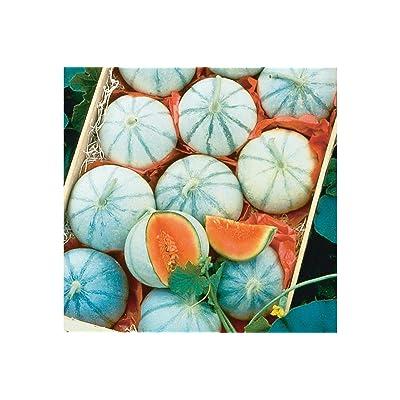 F1 Hybrid French Savor Melon 25 Seeds by AchmadAnam : Garden & Outdoor