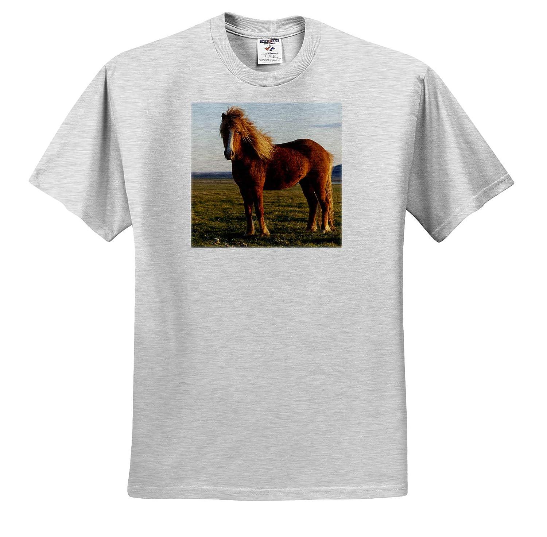 Iceland - Adult T-Shirt XL 3dRose Danita Delimont Horses Icelandic Horse in Sunset Light ts/_313631