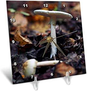3dRose Photograph of a Mushroom in The Woods Along a Trail in South. - Desk Clocks (dc_327698_1)