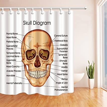 GoEoo Skull Diagram Shower Curtains For Bathroom Medical Education Chart Of Biology Human Polyester Fabric