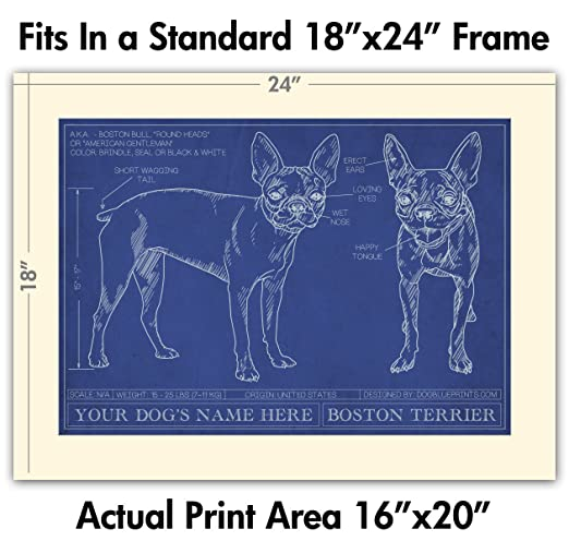 Amazon boston terrier blueprint with personalized dog name amazon boston terrier blueprint with personalized dog name makes a great gift unframed art poster posters prints malvernweather Images